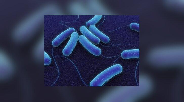 koli bakter