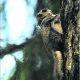 Metsade väärtus hääbub, kuid ka elurikkus on rikkus