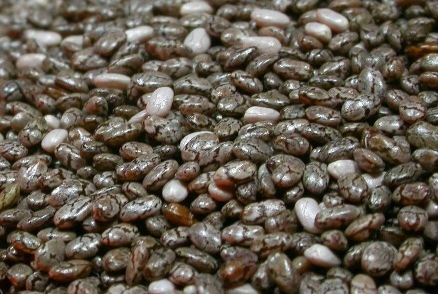 Chia seemned - võimas supertoit, mis kosutab nii keha kui ka vaimu