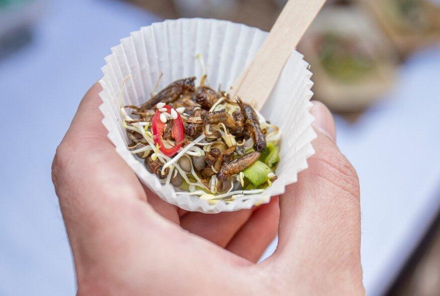 Putukate söömine tänavatoidufestivalil