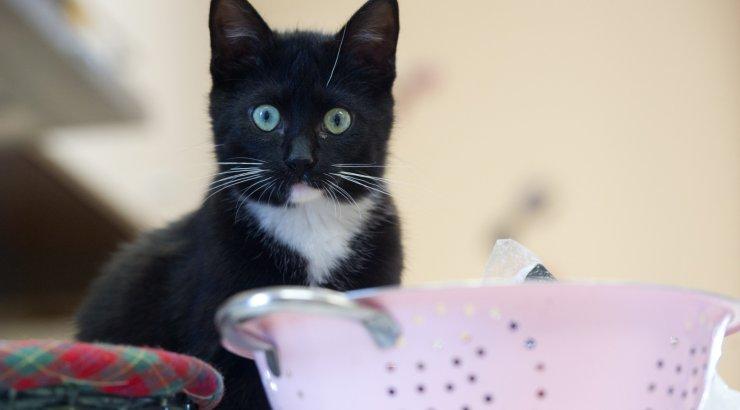 Musta Kassi Kuu : Oktoober on musta kassi kuu saad varjupaigast