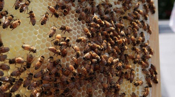 торт пчелиный рой рецепт с фото