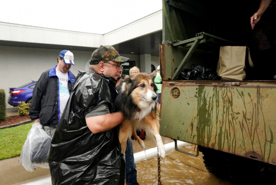 https://www.buzzfeed.com/gabrielsanchez/heartbreaking-pictures-of-animals-affected-by-hurricane?utm_term=.xooq8EOrn#.ttEmAjqwD