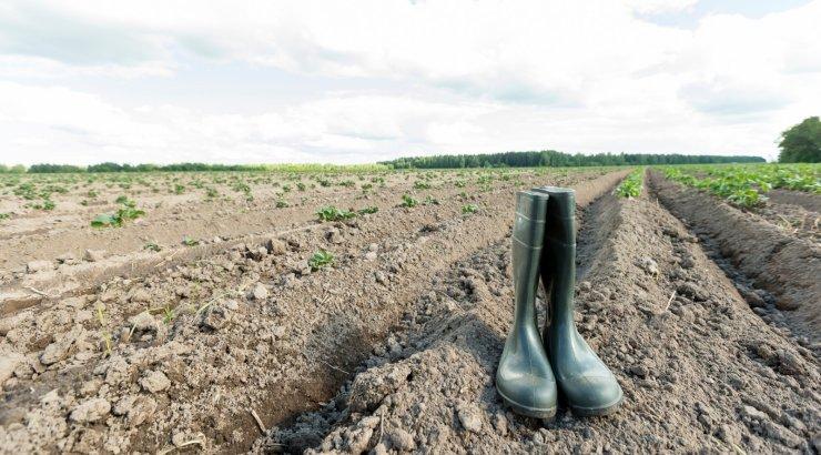 Maaeluministeerium ei kuuluta välja looduskatastroofi