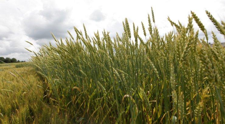 põllumajandus eestis