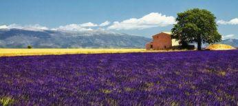 Jalgrattareis Prantsusmaal. Veiniradadel Rhone'i orust Vahemere äärde Provence'i.
